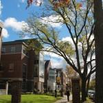 Entering campus, walking down Madison Ave. (photo: Kayla Germain)