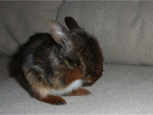 See? This bunny is scared about the future too. Photo taken from Google.