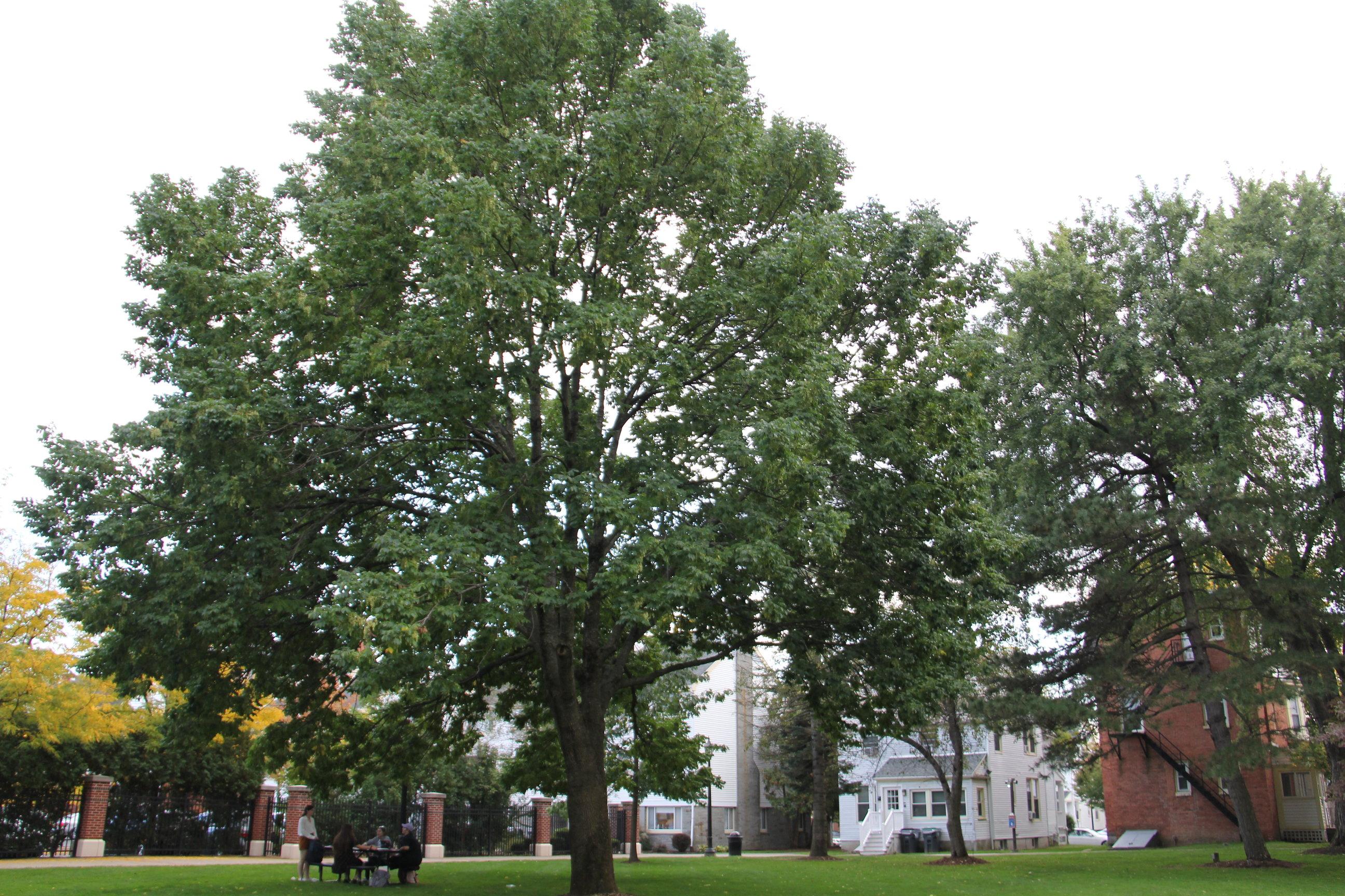 Saint Rose campus featuring trees