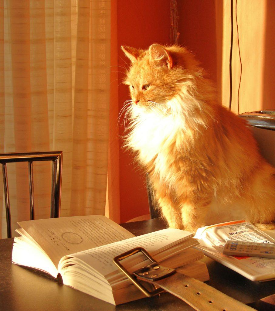 cat ignoring a book