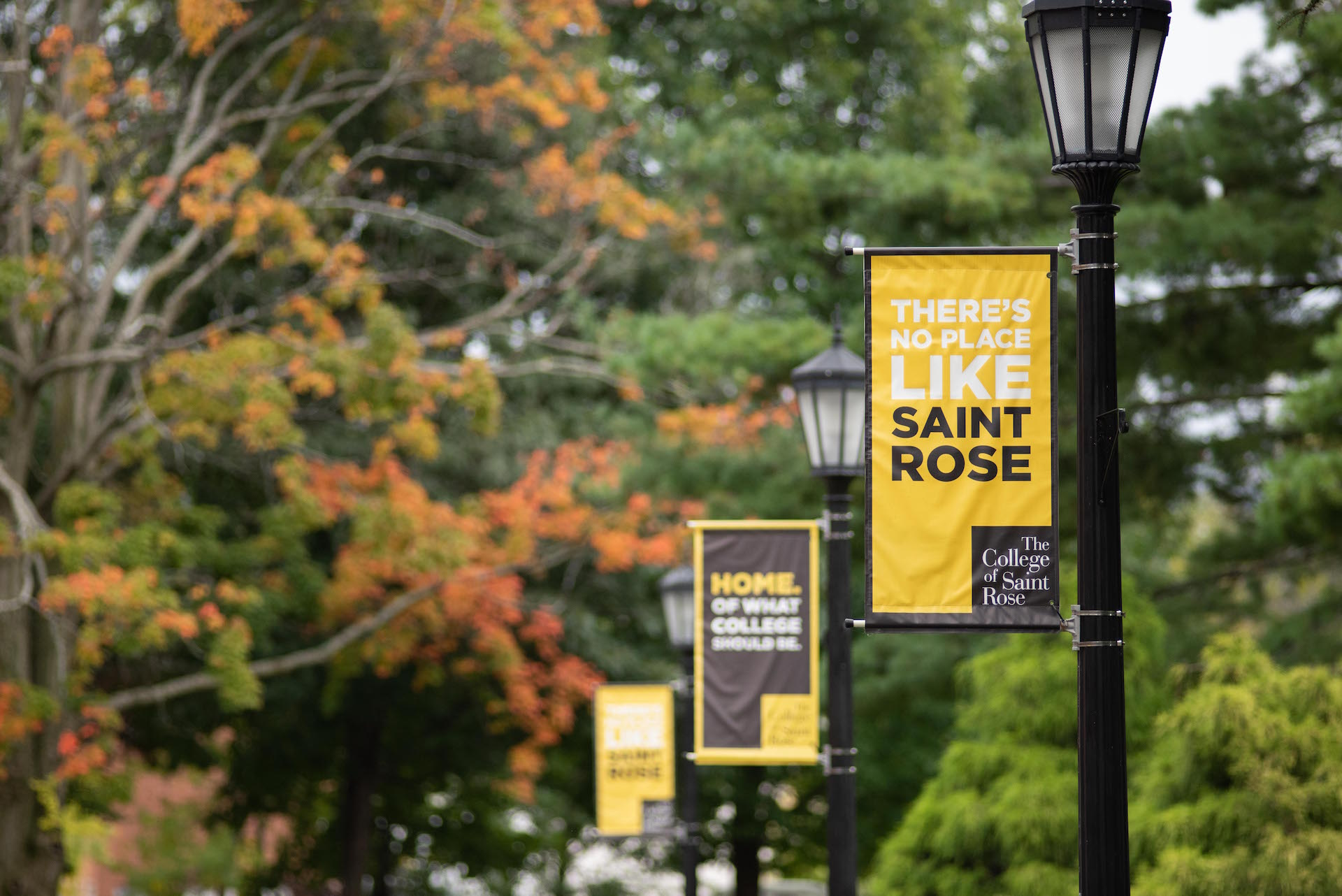 Saint Rose flags along lightpoles